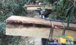 """Vụ phục bắt đoàn xe chở gỗ lậu: Thêm 1 đối tượng """"sa lưới"""""""