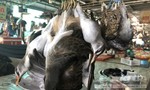 Không ăn thịt động vật hoang dã để phòng ngừa virus Corona