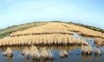 Hạn, mặn tiếp diễn khốc liệt: Hơn 80.000 hộ dân thiếu nước sinh hoạt