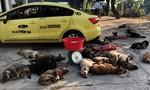 Phục bắt nhóm cẩu tặc dùng taxi vận chuyển chó