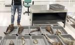 Bắt gần 30 kg nghi sừng tê giác trên chuyến bay từ vùng dịch về