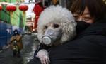 Chú chó nhiễm SARS-CoV-2, nghi bị lây từ chủ