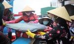 Tàu về cá đầy khoang, nhưng giá giảm mạnh khiến ngư dân thua lỗ