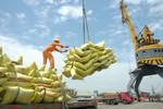 Thủ tướng yêu cầu thanh tra việc chấp hành quy định về xuất khẩu gạo