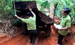 """Bắt 2 xe máy cày chở gỗ lậu """"khủng"""" khỏi rừng"""