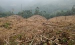 Nhóm đối tượng bán rừng phòng hộ lấy tiền tiêu xài
