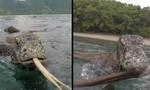 Rồng Komodo trồi lên từ biển tấn công người