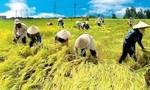 Chuyển cơ quan điều tra hồ sơ sai phạm đấu thầu mua gạo dự trữ quốc gia