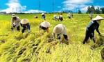 Kiến nghị cho xuất khẩu gạo bình thường từ 1/5/2020