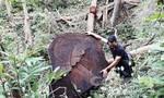 Rừng bị khai thác, chủ rừng không phát hiện được