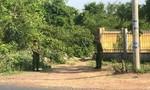 Đắk Lắk: Một nài voi bị voi quật tử vong
