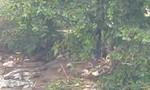 Thi thể thanh niên treo cổ trên cây bàng dưới chân cầu Đồng Nai