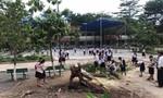 Thêm một cây phượng bật gốc trong trường tiểu học ở Bình Dương