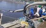 Bị nhóm thương lái dùng chiêu để qua mặt, chủ hồ mất hàng tấn tôm