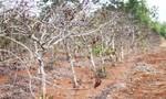 TPHCM hỗ trợ Gia Lai 500 triệu đồng khắc phục hậu quả hạn hán