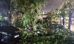 TPHCM: Mưa lớn khiến nhiều cây gãy nhánh đè trúng ô tô, xe máy