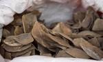 Trung Quốc cấm sử dụng vảy tê tê trong Đông y