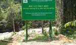 Nhiều công ty lâm nghiệp trục lợi tiền từ dịch vụ môi trường rừng