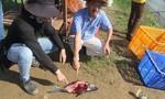 Sét đánh xuống ao cá, 12 công nhân thoát chết thần kỳ