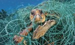 Clip giải cứu rùa biển mắc kẹt trong hàng chục kg lưới