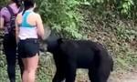 Clip người leo núi hoảng hồn khi bị gấu đen chồm lên