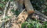 Hạt trưởng Kiểm lâm ở Quảng Nam bị dọa giết