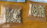 Mỹ khuyến cáo dân cảnh giác trước hạt giống gửi đến từ Trung Quốc