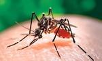 Bệnh Chikungunya ở Campuchia phức tạp, Long An tăng cường phòng chống