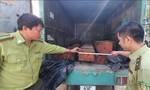 Lâm tặc liều lĩnh lao thẳng ô tô chở gỗ lậu vào tổ công tác