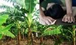 Bắt nghi phạm chặn xe bé gái đưa vào vườn chuối hiếp dâm
