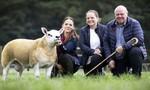 Một con cừu được trả gần nửa triệu USD trong phiên đấu giá