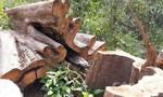 Phát hiện vụ lấn chiếm 17.000m2 đất rừng để trồng keo
