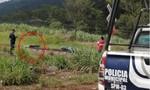 Phóng viên bị tra tấn dã man rồi chém đầu ở Mexico