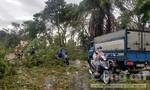 Cán bộ Phòng Giáo dục tử vong do cây ngã đè trong bão