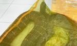 TPHCM: Bị tạm giữ vì mua rắn hổ chúa 20kg từ Campuchia về bán