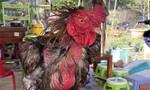 Camera vạch mặt gã thanh niên trộm gà Đông Tảo nặng 5kg