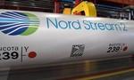 Vụ Navalny bị đầu độc: Nghi vấn nhằm cản trở đường ống khí đốt Nord Stream 2