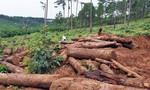 Giao Công an điều tra sai phạm tại các dự án rừng ở Bảo Lâm