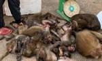 Bị bắt quả tang khi đang vận chuyển 16 cá thể khỉ đã chết đi bán