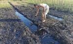 Người dân khốn khổ vì dầu nhớt thải phủ đen đồng ruộng