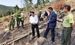 Tạm giữ 2 nghi can phá 3.600 m2 rừng phòng hộ ở Đà Lạt