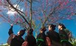 """Giới trẻ phát cuồng với """"rừng hoa xuân"""" trên đỉnh Fansipan"""