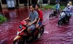 """Clip ngôi làng ở Indonesia đón... """"lũ máu"""""""