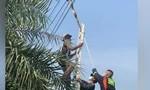 Clip cảnh sát giải cứu trăn khủng mắc kẹt trên dây điện