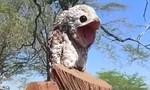 Clip con chim lạ, khổng lồ khiến người đối diện khiếp sợ