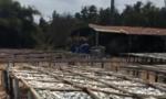Người dân kêu cứu vì cơ sở chế biến cá gây ô nhiễm