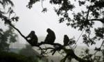 Ấn Độ bắt 2 người đàn ông dùng khỉ để ăn trộm tiền