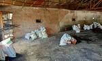 Vụ chôn lấp trái phép 138 con heo chết: Bị phạt 8 triệu đồng