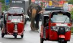 Sri Lanka lâm vào suy thoái kinh tế tồi tệ nhất trong 73 năm vì Covid-19