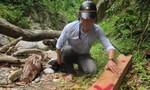 Khởi tố 2 đối tượng trong vụ phá gần 23.000m2 rừng tự nhiên